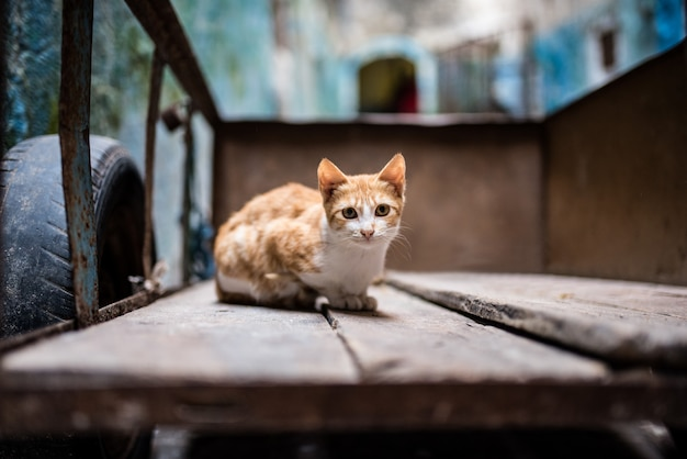 Katze auf der straße in einer schubkarre