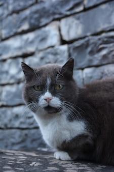 Katze auf der straße
