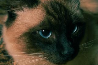 Katze, auf der suche