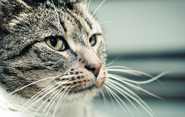 Katze, auf die seite