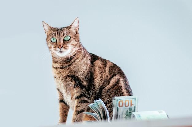 Katze auf einem hintergrund eines geldbündels. konzept der tierspende. gemischte medien