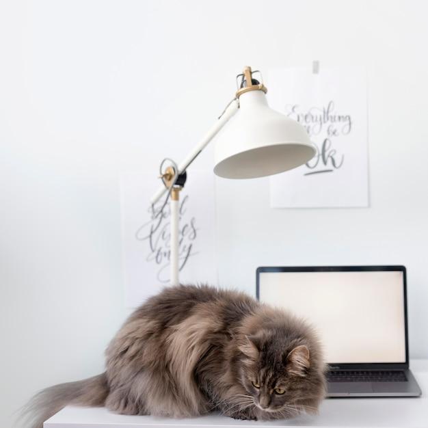 Katze auf freiberuflichem schreibtisch