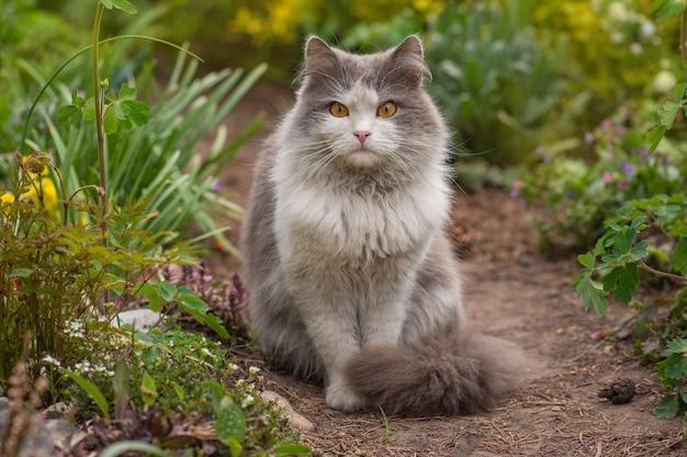Katze auf gartenweg nahe blumen an einem klaren tag