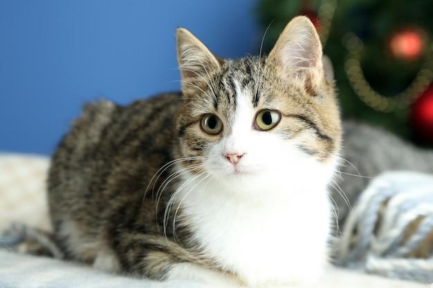Katze auf plaid auf weihnachtsbaumhintergrund