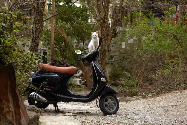 Katze auf roller