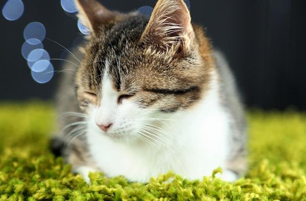 Katze auf weihnachtsgirlandenhintergrund