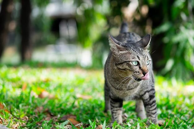 Katze der getigerten katze, die etwas auf gras im garten schaut.