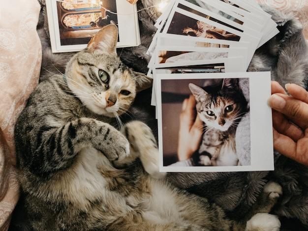 Katze der getigerten katze, die sich im bett und in einigen retro- fotos hinlegt