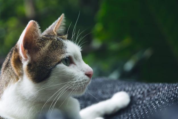 Katze des weißen und kurzen haares, die mit kopienraum für einsatztext liegt und betrachtet.