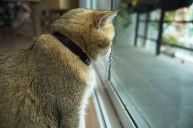 Katze, die am fenster schaut
