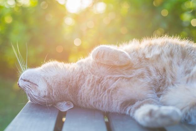 Katze, die auf bank in der hintergrundbeleuchtung bei sonnenuntergang liegt
