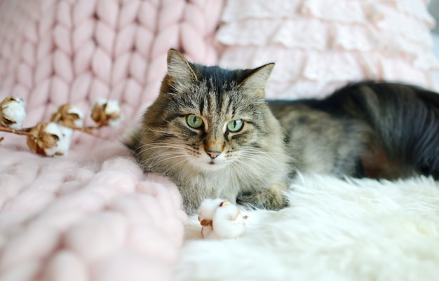 Katze, die auf bett-riesigen plaid-decken-pelz-schlafzimmer-winter-schwingungen cosines liegt, entspannen sich