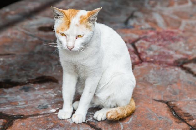 Katze, die auf der straße sitzt und auf inhaber wartet