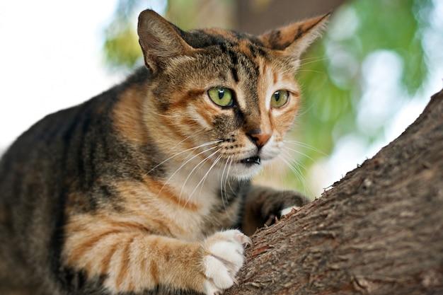 Katze, die auf einem baum klettert
