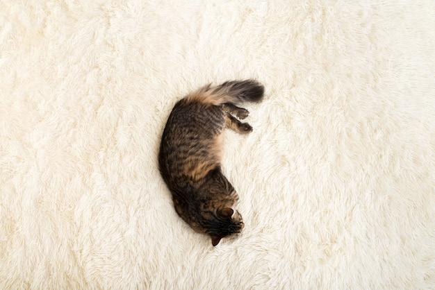 Katze, die auf einer decke aus weiß, künstlich, plüsch, fell, draufsicht ruht