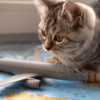Katze, die auf einer karte mit einem flugzeugspielzeug sitzt