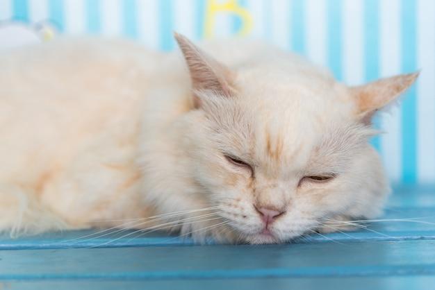 Katze, die auf holzstuhl bei der reise schläft