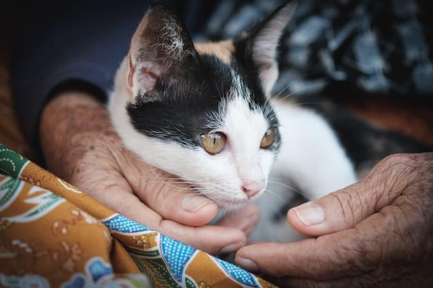 Katze, die auf schoss, kätzchen des asiaten liegt