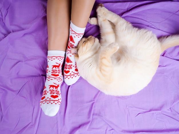 Katze, die auf sofa im wohnzimmer verziert für weihnachten, weibliche beine in den weihnachtssocken liegt.