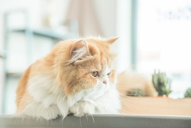 Katze, die auf tabelle in einem haus liegt