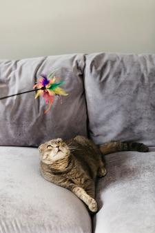 Katze, die das spielzeug liegt auf couch betrachtet