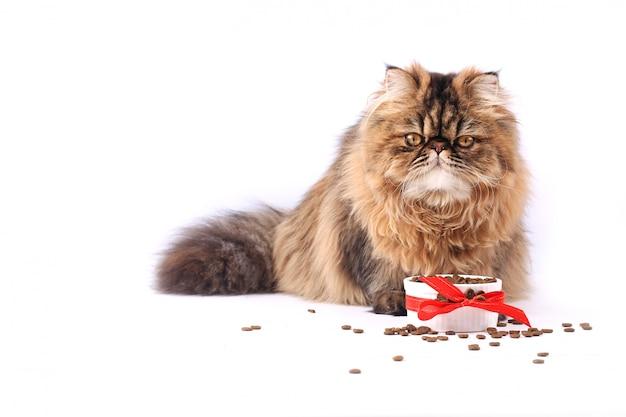 Katze, die das trockene lebensmittel lokalisiert auf weißem hintergrund isst. persisches kätzchen
