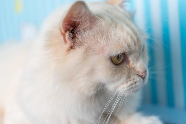 Katze, die etwas wenn reise sitzt und betrachtet