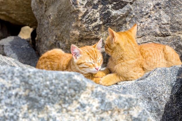 Katze, die friedlich in der sonne auf einem stein auf einem strand, am sonnigen tag schläft