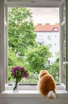 Katze, die im frühling draußen am offenen fenster schaut