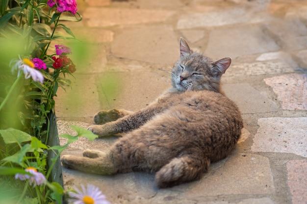 Katze, die im garten auf der terrasse entspannt