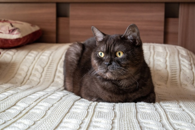 Katze, die im schlafzimmer auf bett liegt, bedeckt mit weißer gestrickter decke