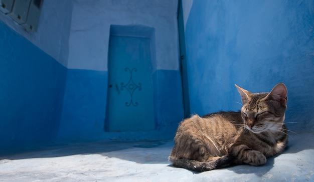 Katze, die in chefchaouen sich entspannt