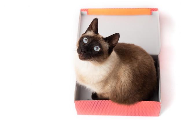 Katze, die in einem farbkasten lokalisiert sitzt. karton mit einer katze