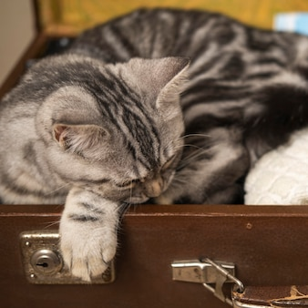 Katze, die in einer gepäckkiste schläft