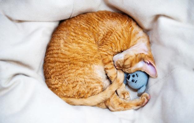Katze, die mit einem weichen strickspielzeug schläft