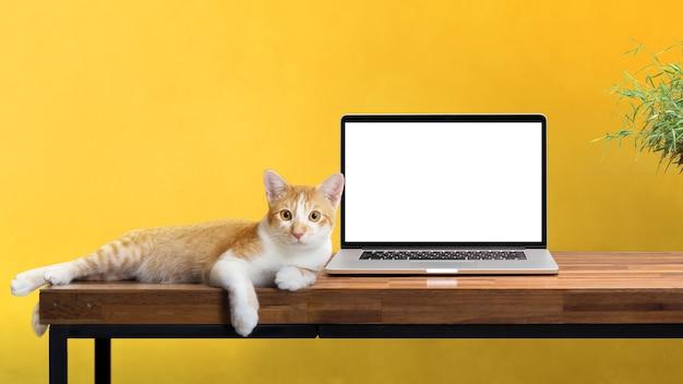 Katze, die mit leerem laptop auf dem holztisch lokalisiert auf weiß sitzt