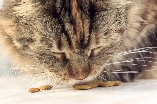 Katze, die nahaufnahme isst