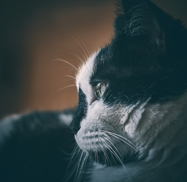 Katze, die zu einer seite mit detail im auge schaut