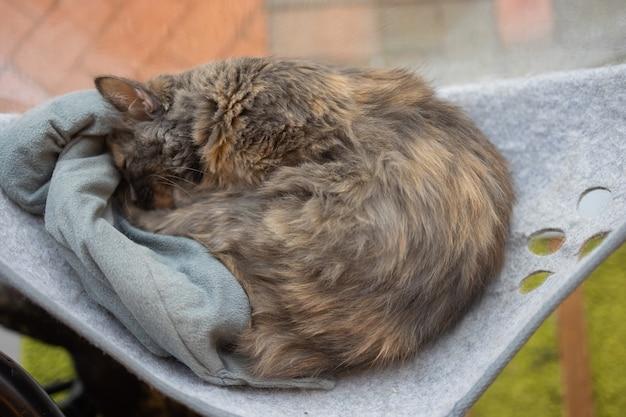 Katze, die zu hause in einem an der wand befestigten glasbett liegt.