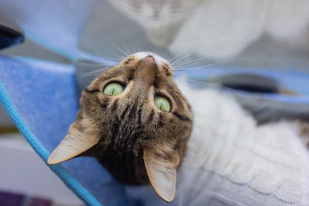 Katze, die zu hause in einem wandbett aus glas liegt