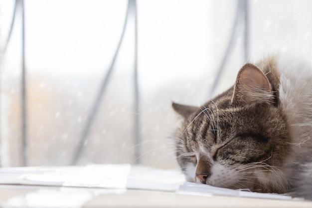 Katze, die zuhause unter dem fenster schläft. schnee draußen