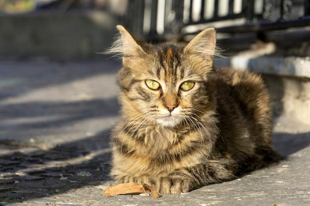 Katze entspannte katzen auf der straße