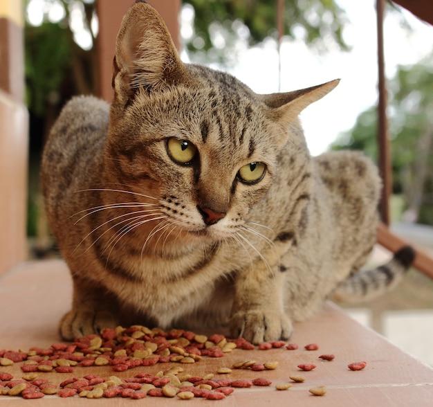 Katze essen auf dem boden und starrte herum.