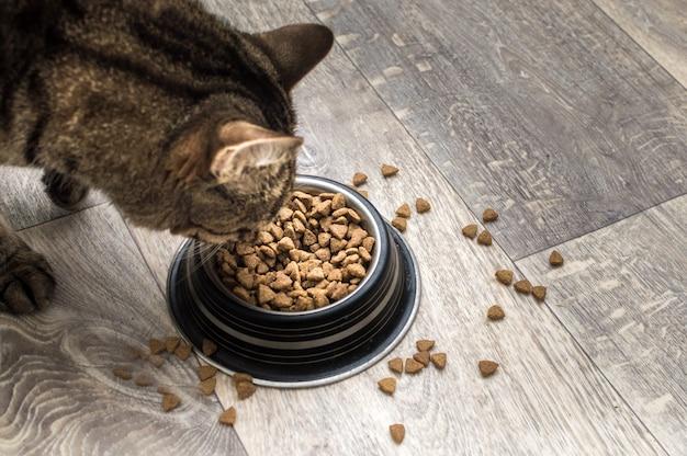 Katze frisst trockenfutter auf dem küchenboden. essen ist auf dem boden verstreut