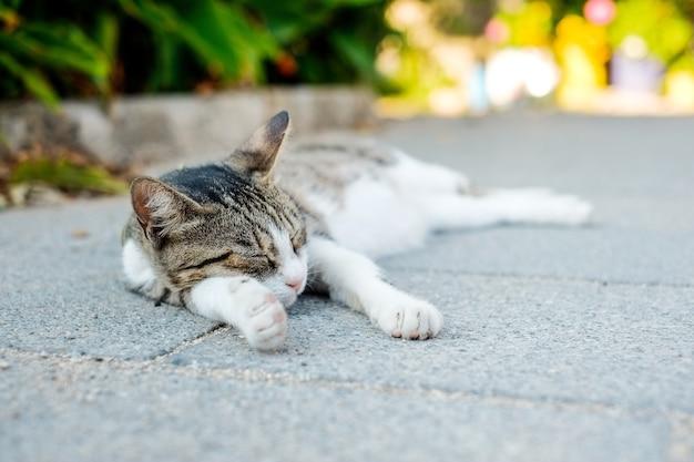 Katze gegen blauen himmel und meer in santorini insel, oia, griechenland