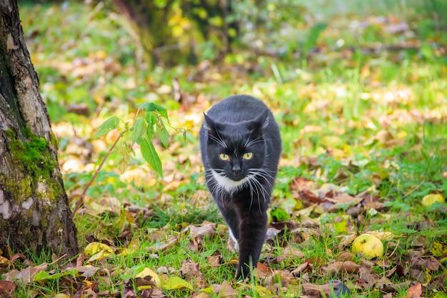 Katze geht auf das gras. krankenschwester. grünes gras.