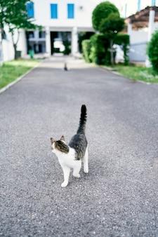 Katze geht auf dem asphalt vor dem hintergrund eines großen gebäudes bäume und büsche