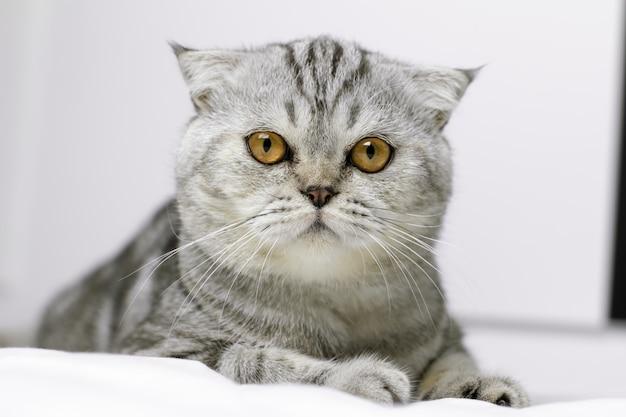 Katze hockt auf weißem bett im raum.