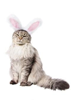 Katze im anzug eines kaninchens lokalisiert auf weißem hintergrund