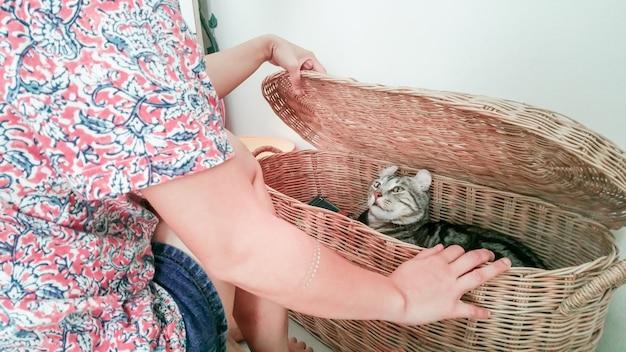 Katze im korb erschien peekaboo im haus zu spielen.